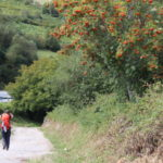 Just stop and stay at home for the necessary time… But don't forget the Camino! Don't forget your dreams!